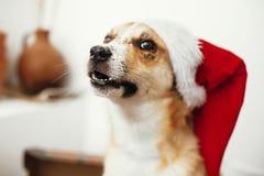 Concept de Joyeux Noël Chien mignon dans le chapeau de Santa avec l'oeil adorable photographie stock
