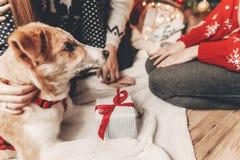 Concept de Joyeux Noël et de bonne année chien mignon avec l'agift Photographie stock