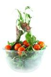 Concept de légèreté de Rucola, de bette à cardes et de salade de tomates photographie stock libre de droits