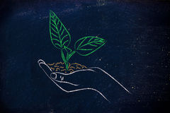 Concept de l'économie verte, mains tenant la nouvelle usine Photo libre de droits
