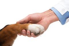 Concept de l'amitié entre le chien et l'homme Photo stock