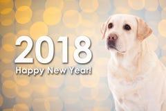 concept de la nouvelle année 2018 - poursuivez le golden retriever au-dessus du dos de Noël Image stock