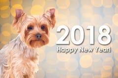 concept de la nouvelle année 2018 - poursuivez le terrier de Yorkshire au-dessus du CCB de Noël Images libres de droits