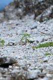 Concept de la nouvelle vie, une pousse se levant sur la roche Photos stock
