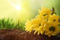 Concept de lente en het tuinieren met aardachtergrond Royalty-vrije Stock Foto