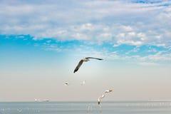 Concept de liberté, mouette blanche montant dans le ciel bleu à Miami image stock