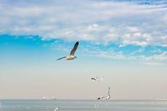 Concept de liberté, mouette blanche montant dans le ciel bleu à Miami photo stock