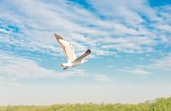 Concept de liberté, mouette blanche montant dans le ciel bleu à Miami images stock