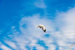 Concept de liberté, mouette blanche montant dans le ciel bleu à Miami image libre de droits