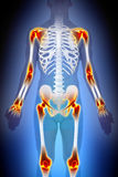 Concept de mâle d'anatomie de douleur de joints d'arthrite illustration de vecteur