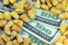 Concept de négoce des produits de base - billet d'un dollar devise cent des USA avec du maïs jaune Image libre de droits