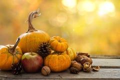 Concept de nature d'automne Photos stock