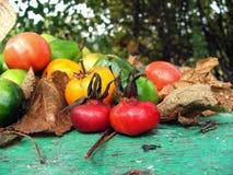 Concept de nature d'automne Fruits, légumes et feuilles de chute sur la vieille table en bois moisson photographie stock