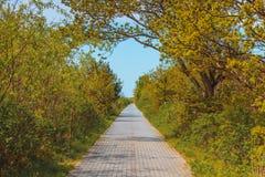 Concept de nature, trottoir en parc vert image stock