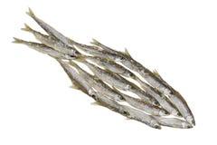 Concept de pêche Image libre de droits