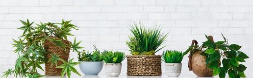 Concept de passe-temps de fleurs de pot photographie stock libre de droits