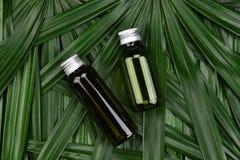 Concept de produit de beauté naturel de soins de la peau, récipients cosmétiques de bouteille sur le fond de fines herbes vert de Image stock