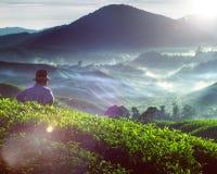 Concept de profession de culture de Tea Plantation Malaysia d'agriculteur images stock