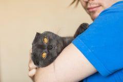 Concept de propriétaire et d'animal familier - le jeune homme tenant un écossais gris plient le chat en gros plan Image stock