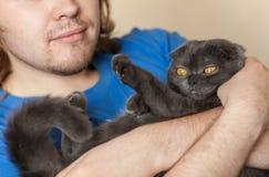 Concept de propriétaire et d'animal familier - le jeune homme tenant un écossais gris plient le chat en gros plan Images stock