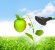 Concept de réussite avec la pomme Photo libre de droits