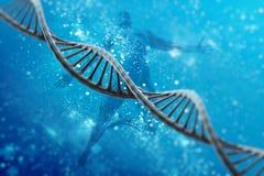 Concept de recherches de modèle de cellules d'ADN, rendu 3D Images stock