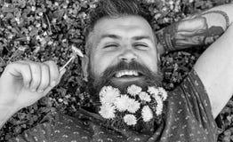 Concept de relaxation Type avec des pissenlits dans la barbe détendant, vue supérieure L'homme barbu avec des fleurs de pissenlit photo libre de droits