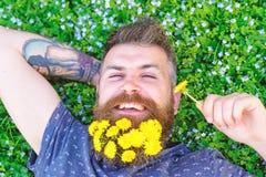 Concept de relaxation Type avec des pissenlits dans la barbe détendant, vue supérieure L'homme avec la barbe sur le visage heureu images libres de droits