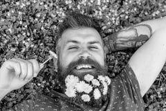 Concept de relaxation Type avec des pissenlits dans la barbe détendant, vue supérieure L'homme avec la barbe sur le visage heureu photos stock