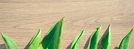 Concept de ressort - feuilles de tulipe sur le fond en bois images stock