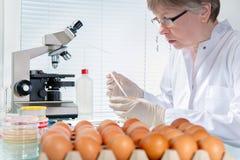 Concept de sécurité alimentaire images stock