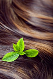 Concept de soins capillaires : beaux cheveux brillants avec des points culminants et le gree Image libre de droits