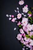 Concept de station thermale avec des fleurs d'amande photo stock