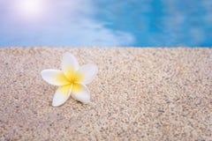 Concept de station thermale, fleurs de Plumeria au bord de piscine photos libres de droits