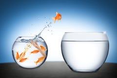 Concept de travail d'équipe de poissons Photo libre de droits