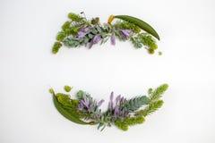 Concept de vacances - encadrez la guirlande avec bleu succulent à feuilles persistantes et photos stock