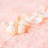 Concept de voyage des coquilles légères de mer sur la texture rose douce de Terry photo libre de droits