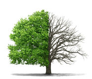 The concept of the dead and the living tree Royalty Free Stock Photo