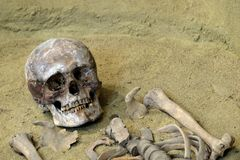 The concept of death and exhumation. The human skull and bones on the sand. Archaeological excavations. stock photo