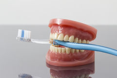Concept dentaire d'hygiène et de propreté Images libres de droits