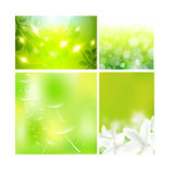 Concept design layout for summer floral Royalty Free Stock Photos
