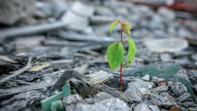 The concept of the desire for life. Sprout grows from construction waste symbol of life Royalty Free Stock Photo