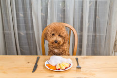 Concept of dog having delicious raw meat meal on table. royalty free stock photos