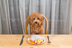 Concept of dog having delicious raw meat meal on table. Royalty Free Stock Images
