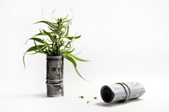 The concept of drug trafficking or legalization. The top of the cannabis sticks out of a hundred-dollar bill folded into a tube. G royalty free stock photos