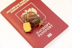 Concept du dégagement à vitesse réduite, des escargots et du passeport de document photographie stock libre de droits
