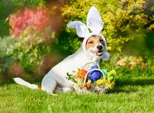 Image result for Easter Greetings with dogs