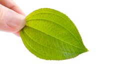 Concept of eco-friendly, new leaf in hand. Stock Images