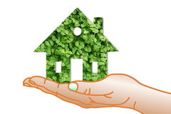 Concept of eco house with chia plant  on hand Stock Photography