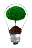 Concept. ecological lamp with green tree Stock Images